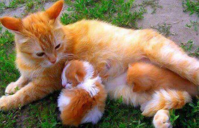den-apelsinovyh-kotov