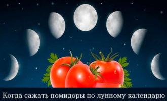 kogda-sazhat-pomidory-po-lunnomu-kalendarju