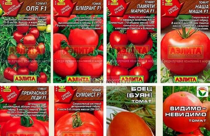 sorta-i-gibridy-tomatov