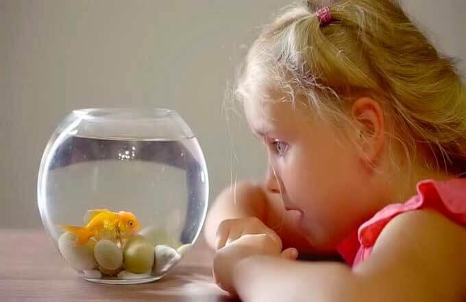 vsemirnyj-den-ispolnenija-detskih-zhelanij