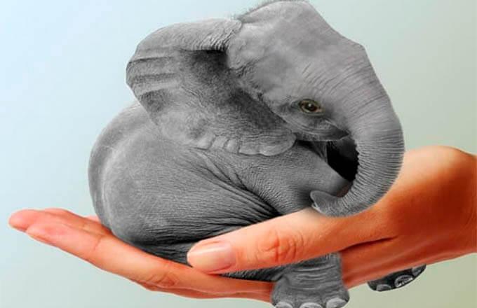 vsemirnyj-den-zashhity-slonov