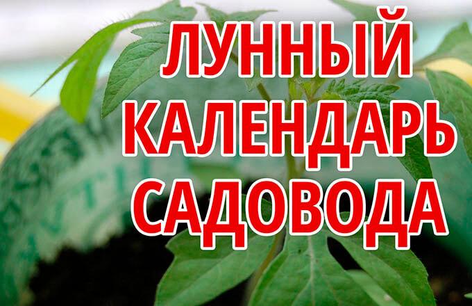 kogda-vysazhivat-tomaty-po-lunnomu-kalendarju