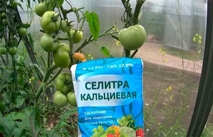 kalcievaja-selitra-dlja-tomatov