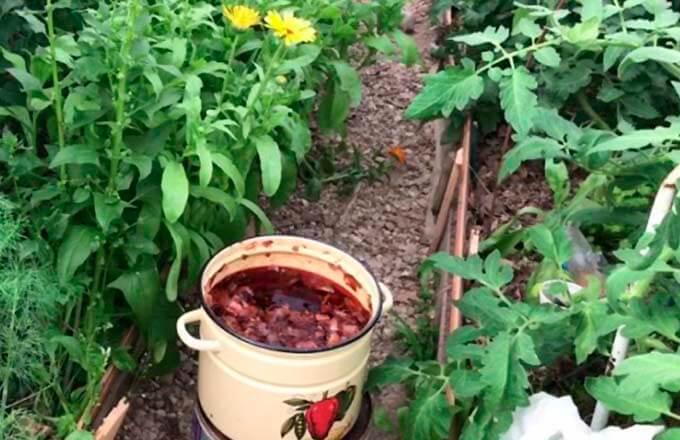 lukovaja-sheluha-dlja-tomatov