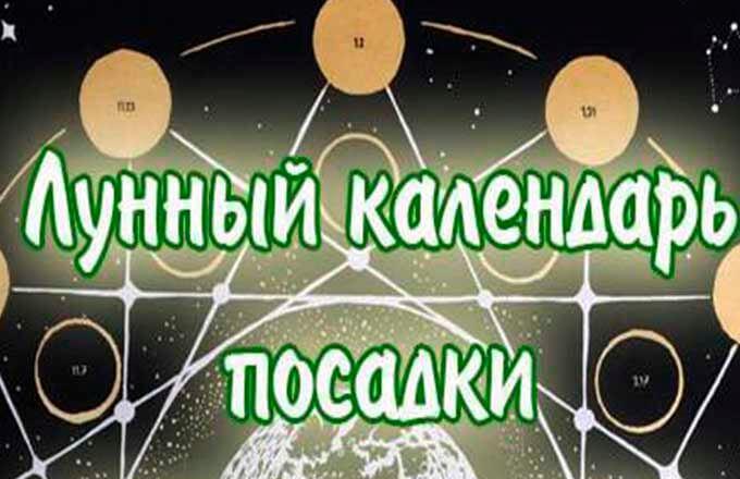 posadka-tjulpanov-po-lunnomu-kalendarju