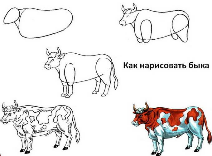 kak-legko-narisovat-byka-detjam_9